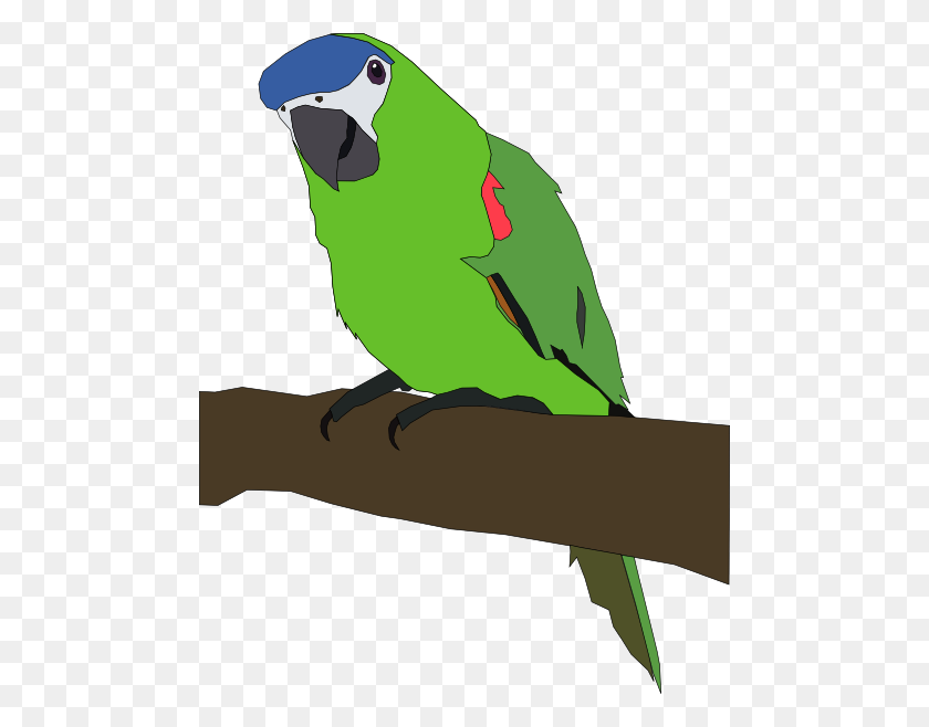 480x598 Parrot Png, Clip Art For Web - Macaw Clipart