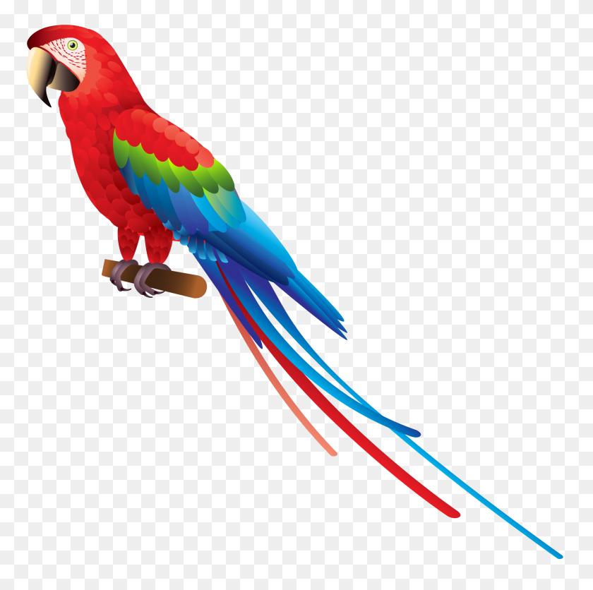 Parrot Png Clipart - Tropical Bird Clipart
