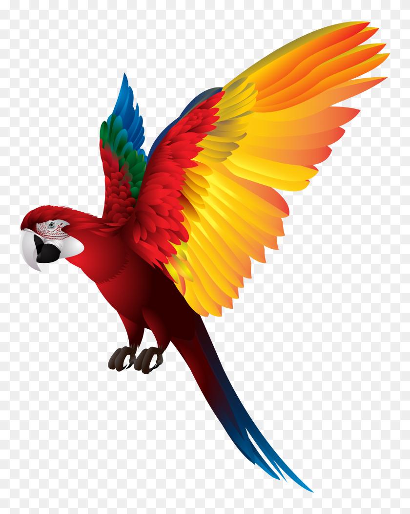6285x8000 Parrot Png Transparent Clip Art - Parrot Clipart