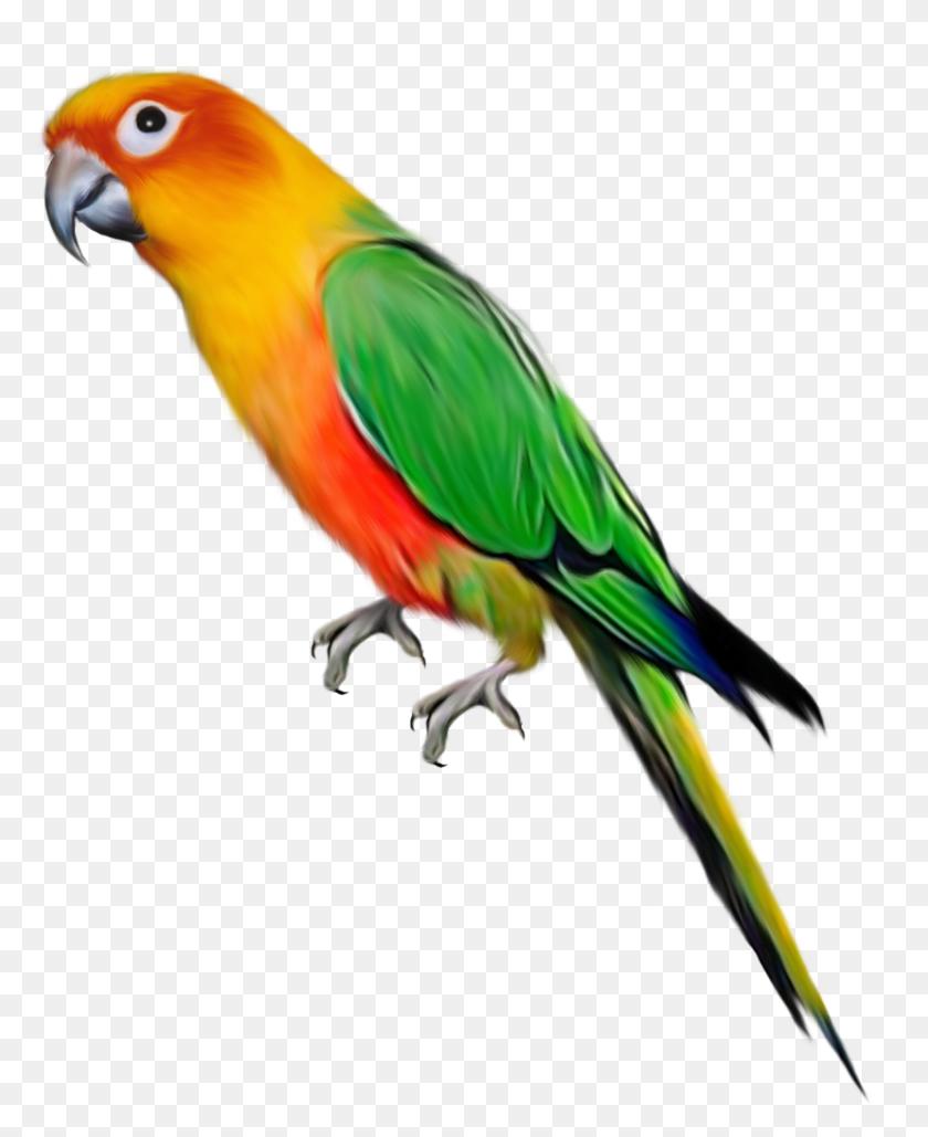 828x1029 Parrots Parrot, Birds, Clip Art - Parakeet Clipart