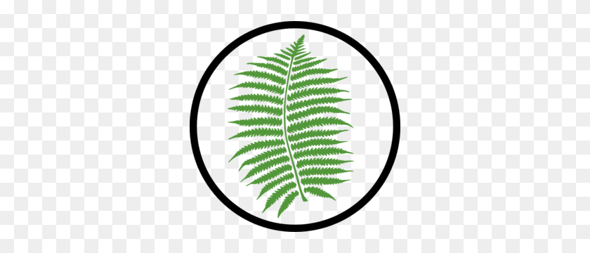 Parts Of A Plant Clipart - Parts Of A Plant Clipart