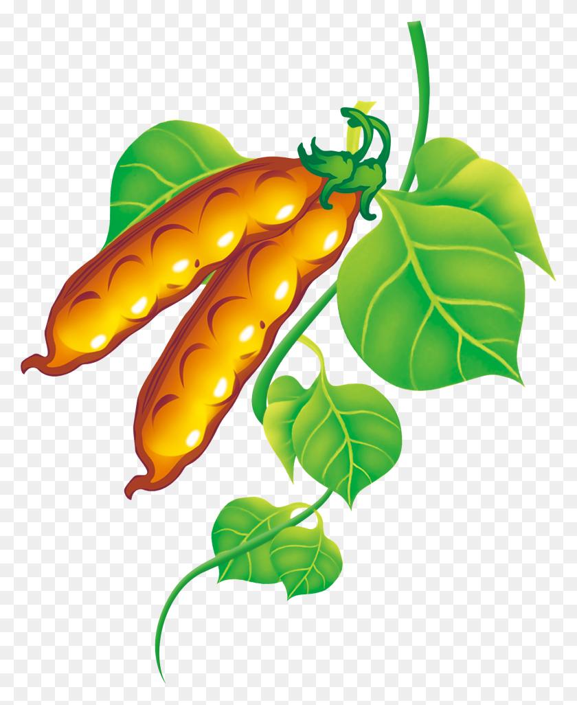 Pea Clipart Green Fruit Vegetable - Fruit Of The Spirit Clipart