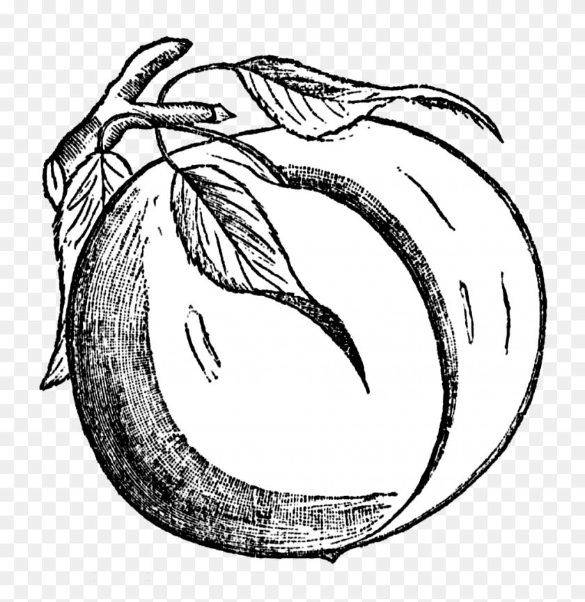 Peach Clip Art - Tree Clipart Black And White