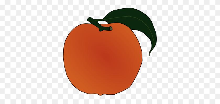 Peach Download Art Document Apricot - Peach Clipart