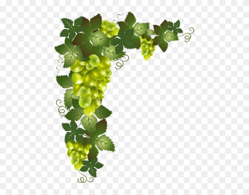 Pencil Drawings Vines, Decoupage - PNG Vines