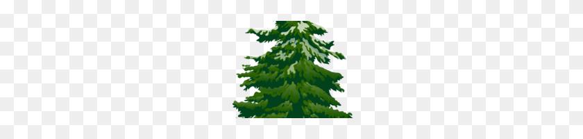 Pine Tree Clip Art Pine Trees Clip Art - Pine Forest Clipart