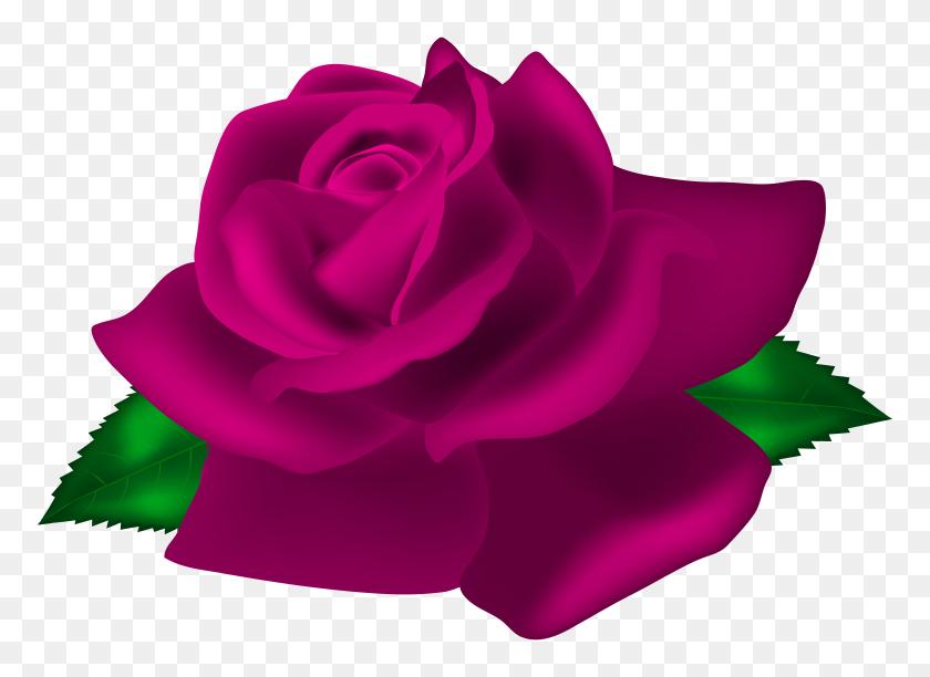 8000x5664 Pink Rose Deco Png Clip Art - Pink Clipart