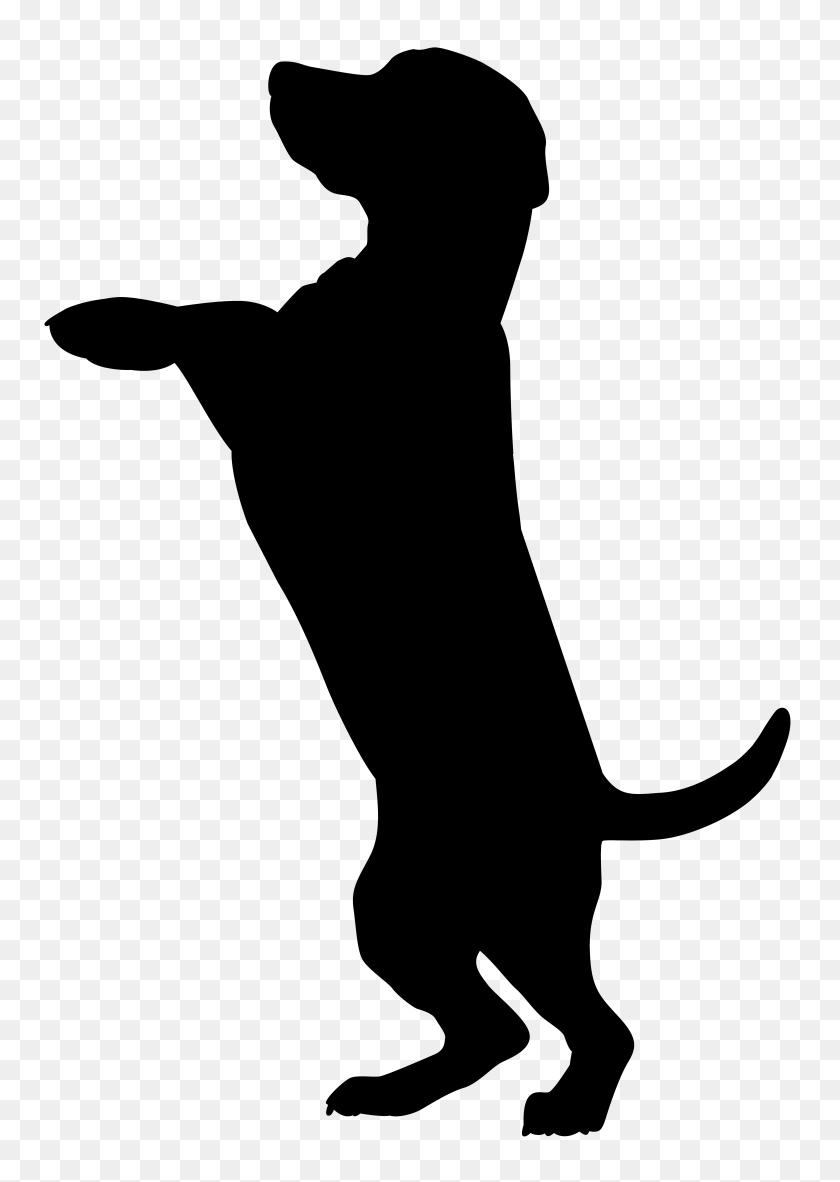 Pitbull Clipart American Pitbull Terrier, Pitbull American Pitbull - Pitbull Clipart