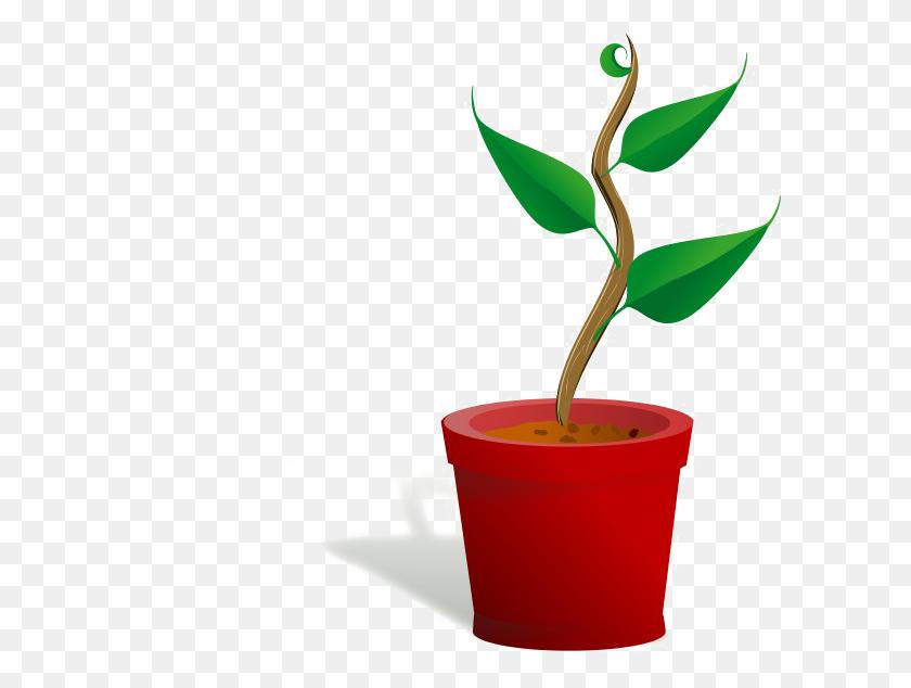 600x574 Plant Png Images Transparent Free Download - Plant PNG