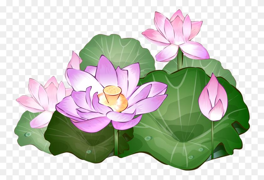 750x515 Png Lotus Flower Transparent Lotus Flower Images - Lotus PNG