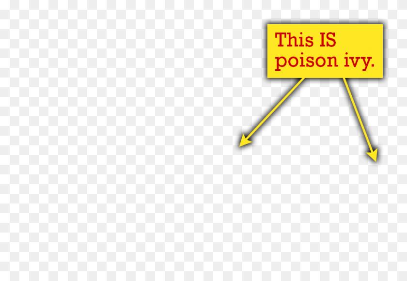 Poison Ivy Quiz The Poison Ivy, Poison Oak, Poison Sumac Site - Poison Ivy PNG
