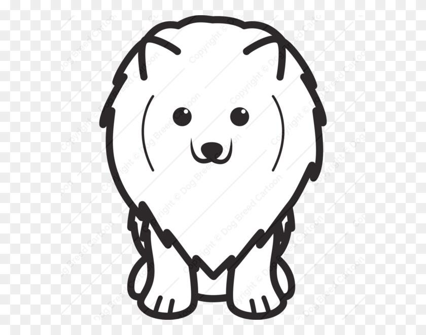 Pomeranian Pomeranian Png Stunning Free Transparent Png Clipart