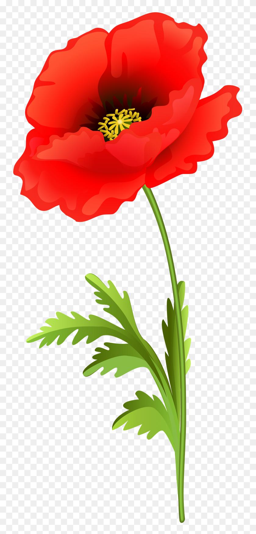 Poppy Flower Png Clip Art - Poppy Clipart