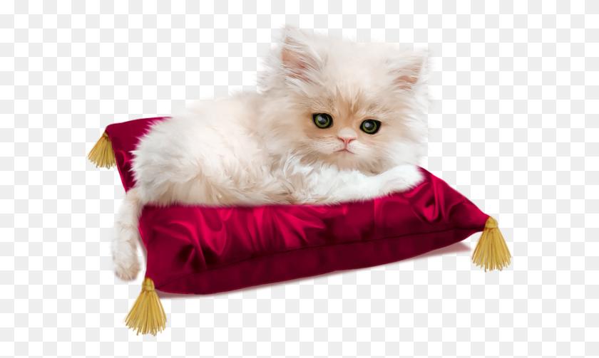 Popular And Trending Kitten Stickers - Kittens PNG