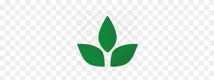 Premium Green Tea Icon Download Png Tea Leaves Png Stunning Free Transparent Png Clipart Images Free Download