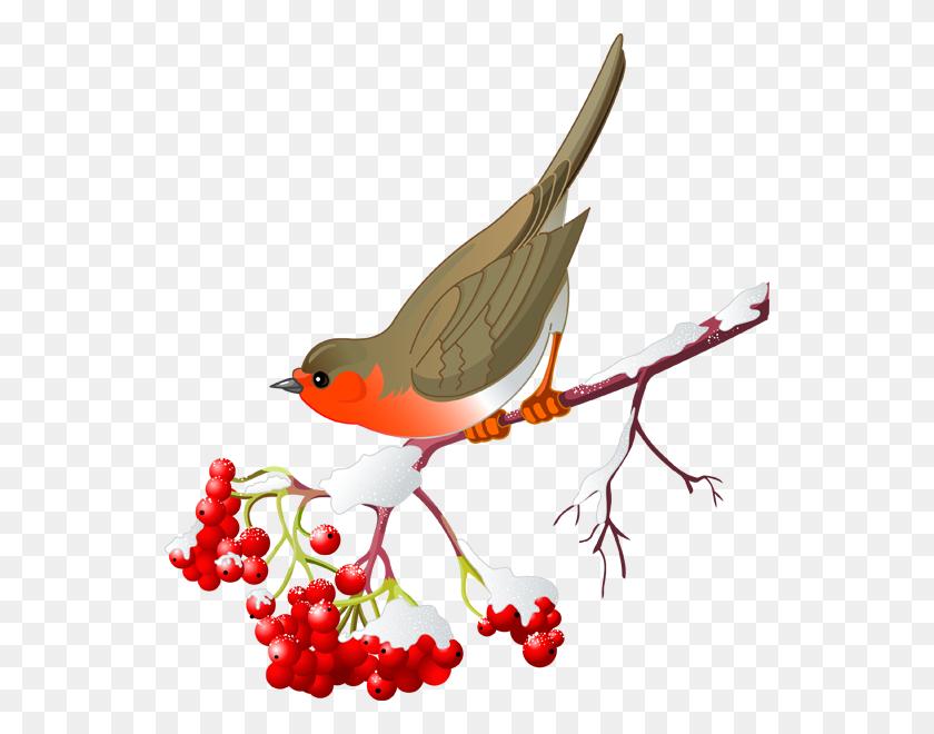 Pretty Bird And Winter Berries Winter Clip Art ! Birds, Pretty - Robin Bird Clipart