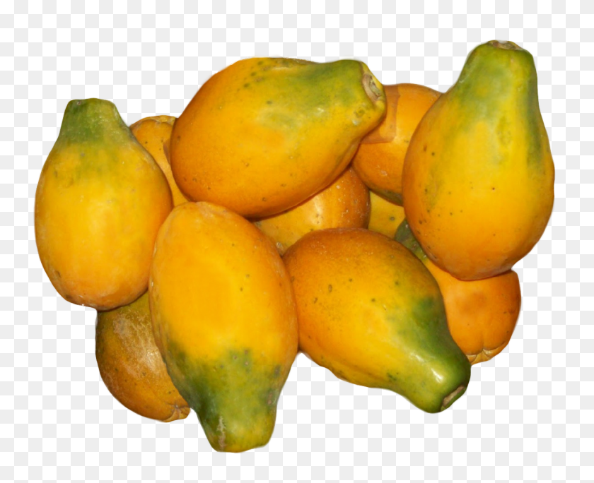 Produce Clerk The Produce Clerks Handbook - Papaya PNG