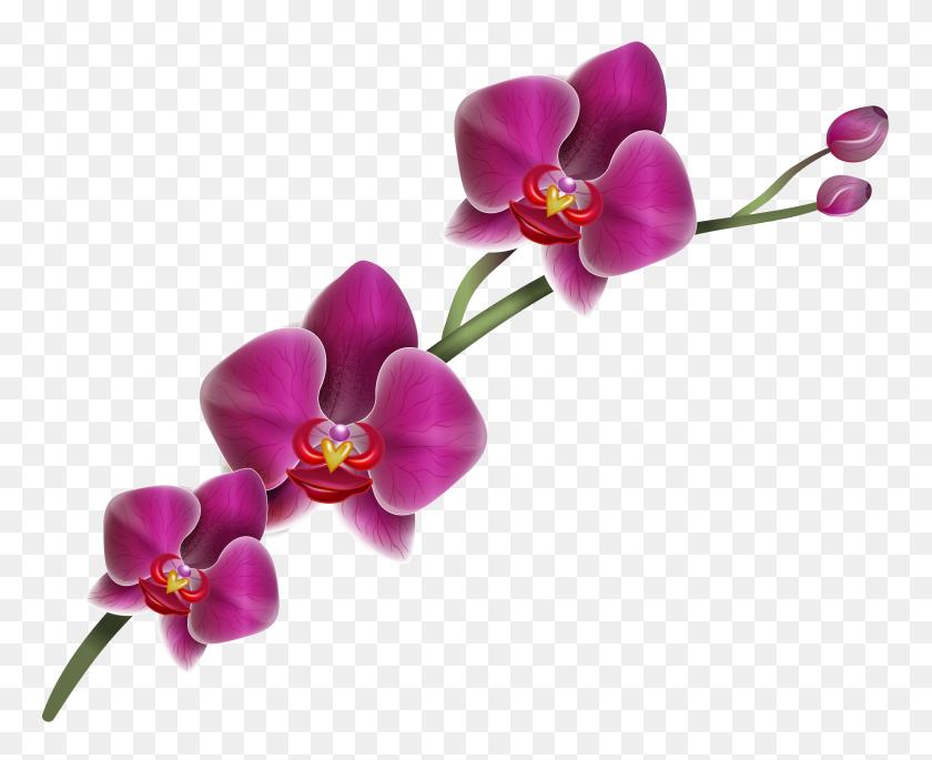 Purple Orchid Clipart Png - Purple Flower PNG