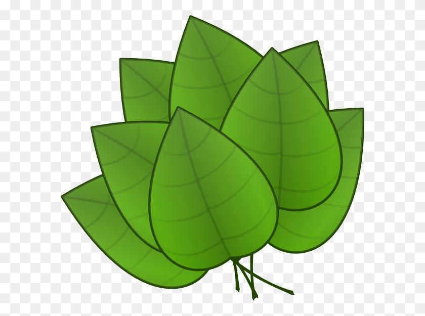 Rainforest Leaves Clipart Free Transparent Images - Rainforest Animals Clipart