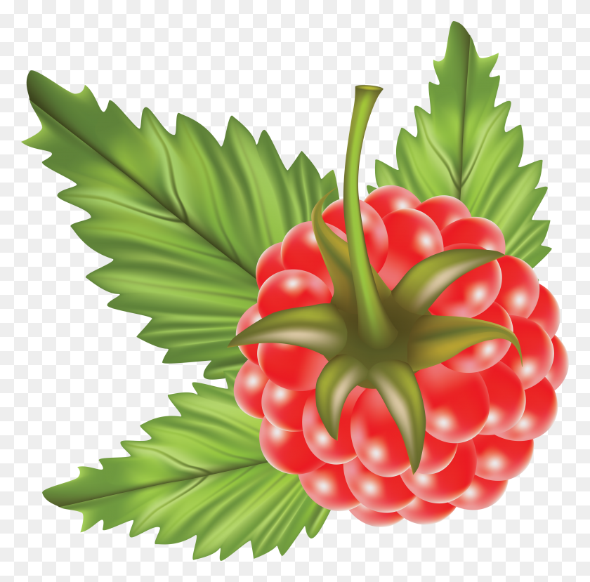 Clip Art Pictures Of Raspberries