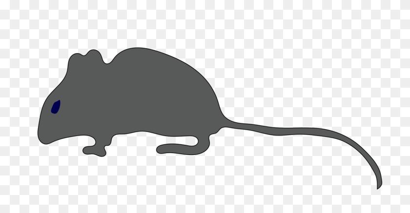 Rat Mouse Gerbil Rodent Cat - Rat Clipart Black And White