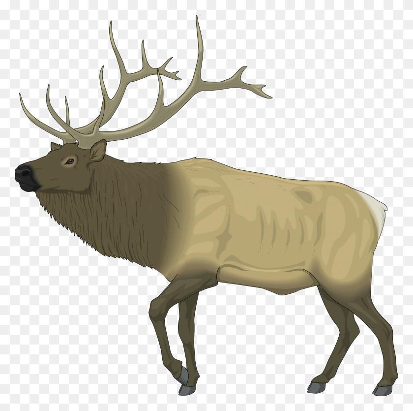 Reindeer Raindeer Elk Black White Line Art - Elk Clipart Black And White