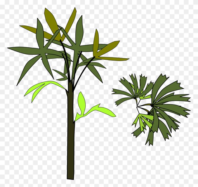 Rhapis Excelsa Palm Trees Branch Computer Icons - Palm Branch Clip Art
