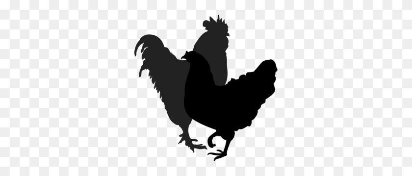 Rooster Hen Silhouette Silhouettes Silhouette - Chicken Silhouette PNG