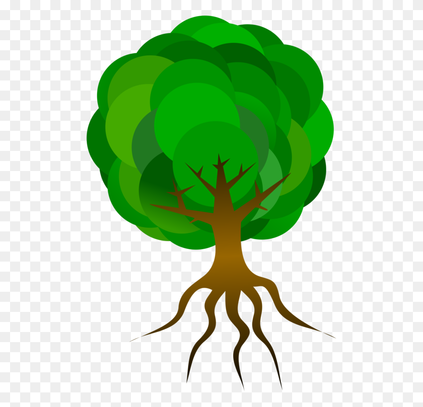 Root Tree Drawing Oak Branch - Mangrove Clipart