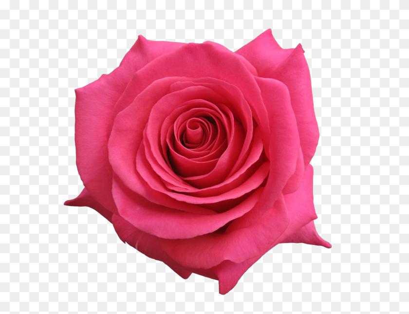 3784x2838 Rose Pink Floyd - Pink Floyd PNG