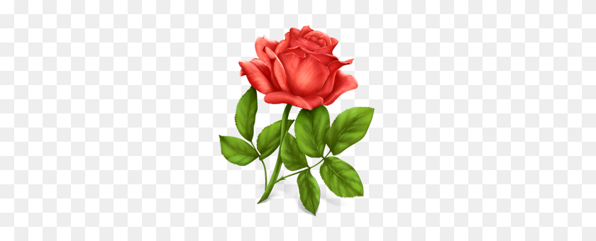 Rose Png - Single Flower PNG