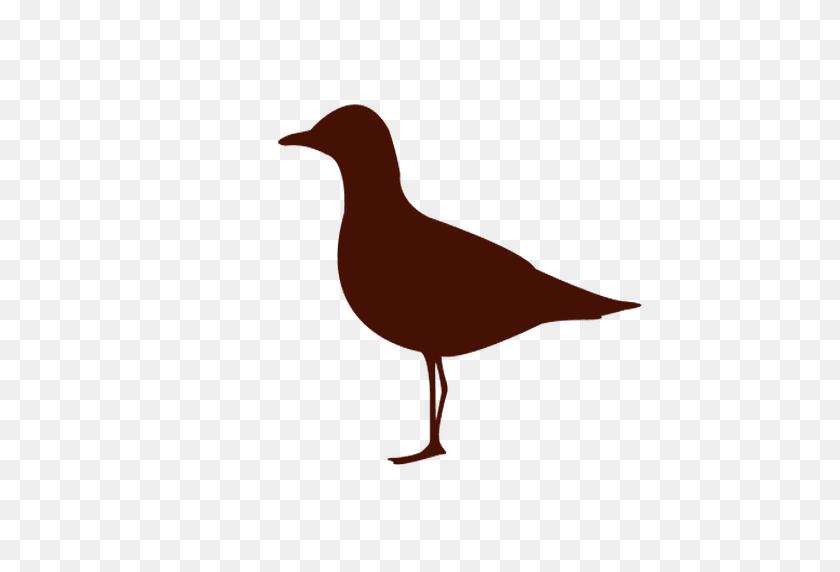 Sea Bird Silhouette - Birds Silhouette PNG