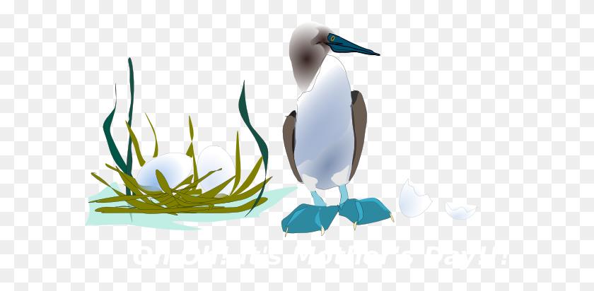Sea Bird With Nest Png, Clip Art For Web - Bird Nest Clipart