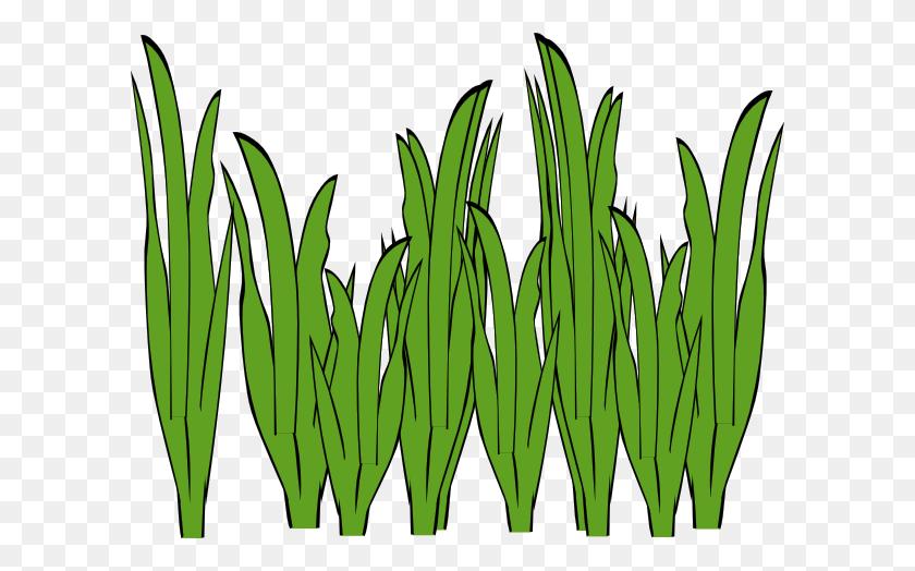 600x464 Seaweed Clipart - Asparagus Clipart