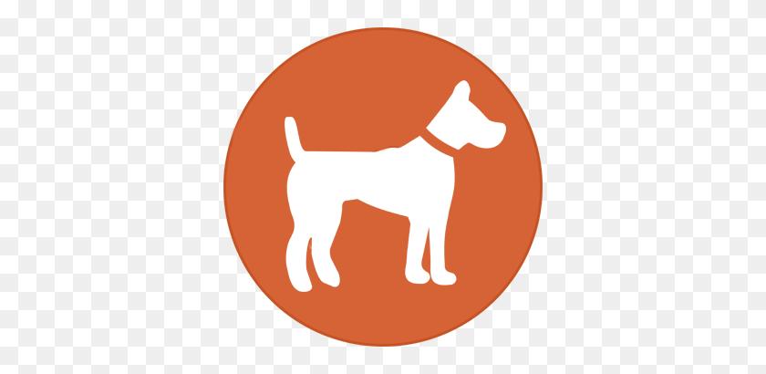 Shiba Inu Puppies - Shiba Inu PNG