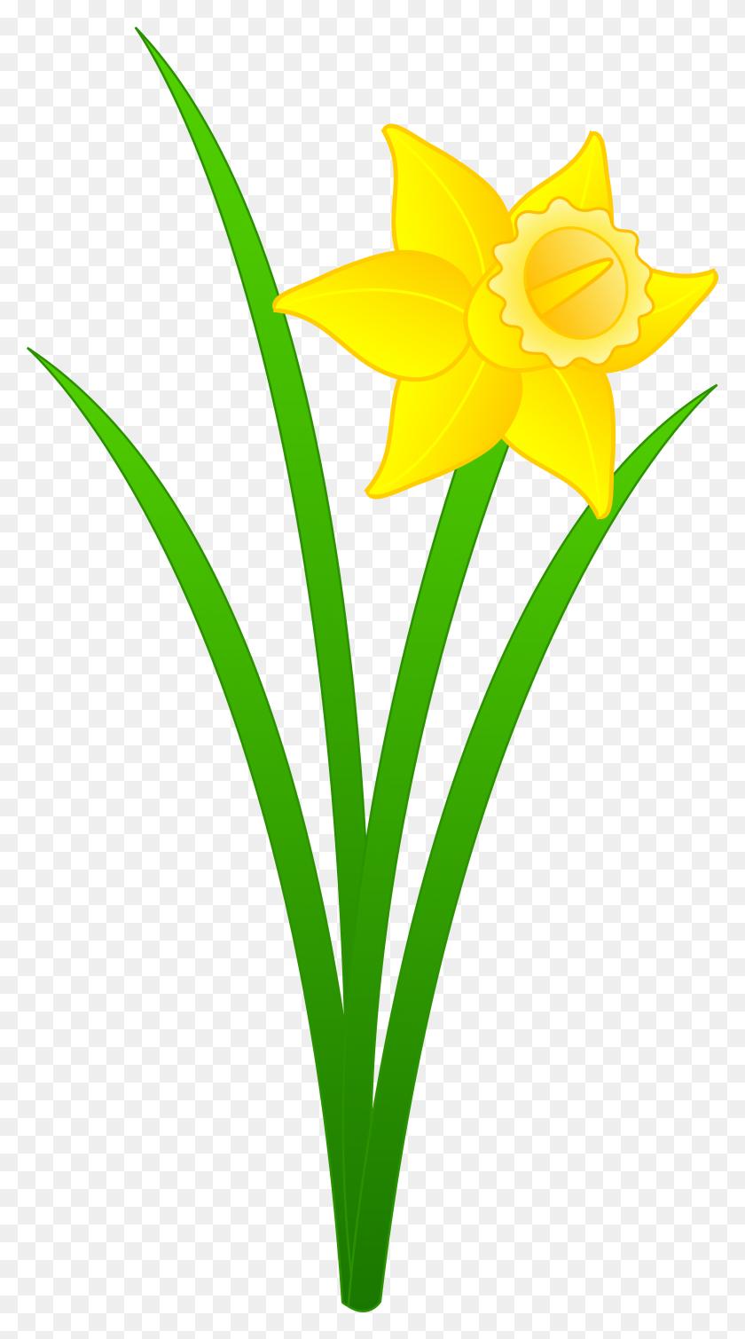 Single Golden Daffodil - Single Flower Clipart