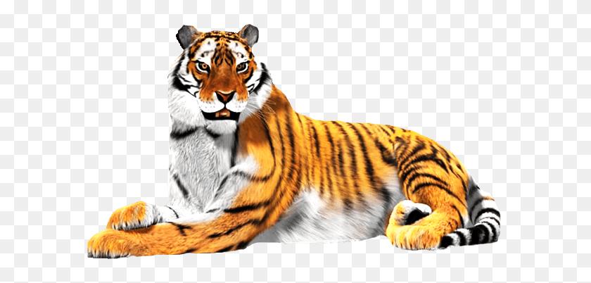 Tiger Face Png - Tiger Face PNG – Stunning free transparent