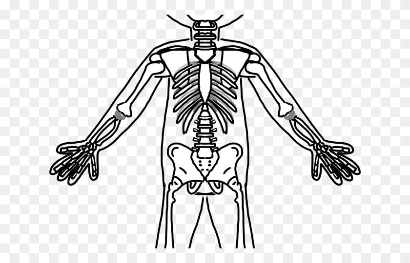 Skeleton Clipart Frog - Skeleton Arm Clipart