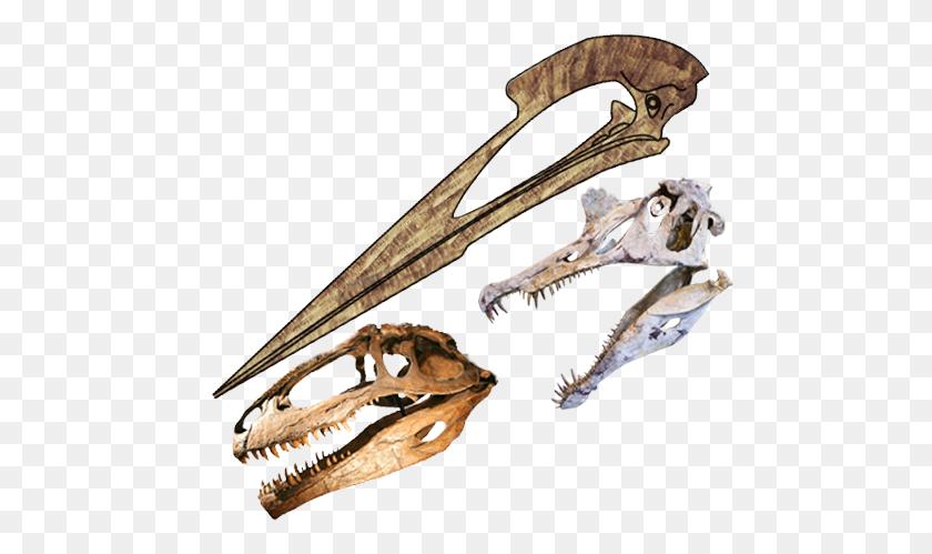 Skulls Length Comparison Of Hatzegopteryx, Spinosaurus - Spinosaurus PNG
