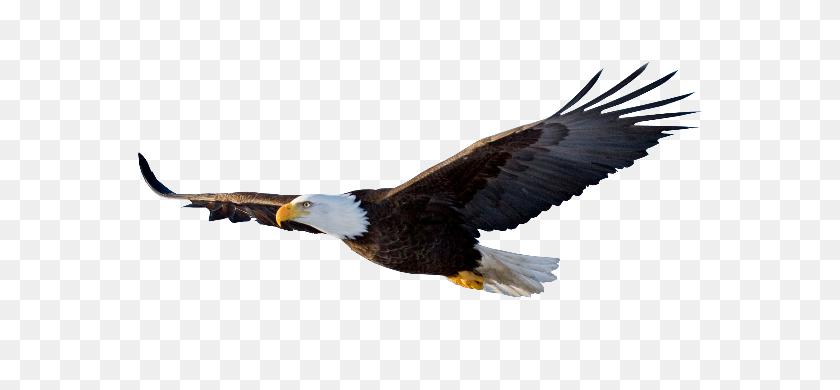 Soaring Eagle Clipart Black And White - Soaring Eagle Clip Art