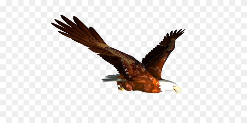 Soaring Eagle Png Clipart - Soaring Eagle Clip Art