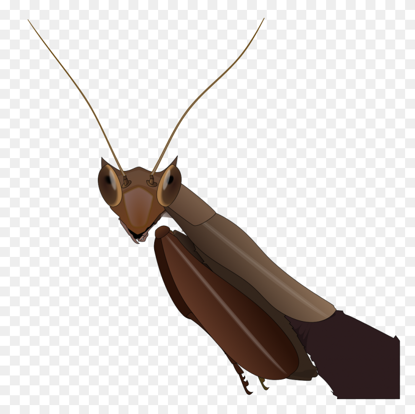 South American Box Mantis - Mantis PNG