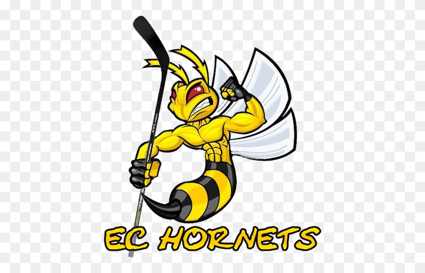 Sport Logos Logos Hornet Mascot Clipart Stunning Free