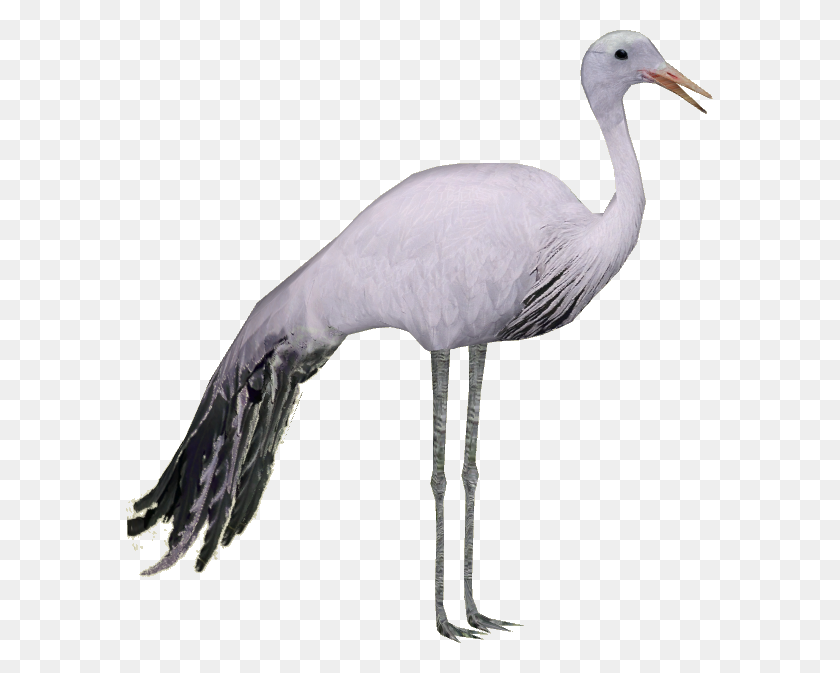 Stork Hd Png Transparent Stork Hd Images - Stork PNG
