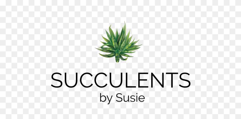 Succulents - Succulents PNG