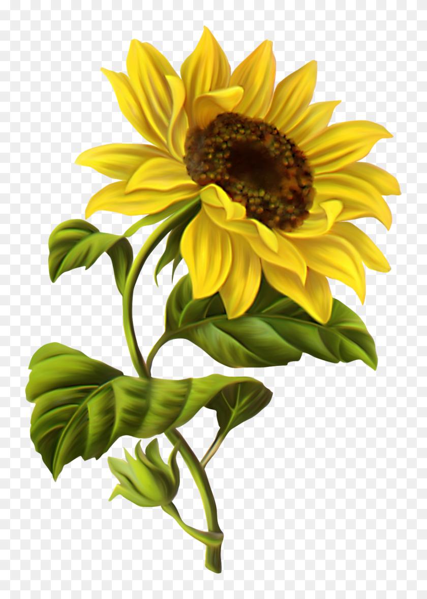 Sunflower Free Sunflower School Cliparts - Sunflower ...
