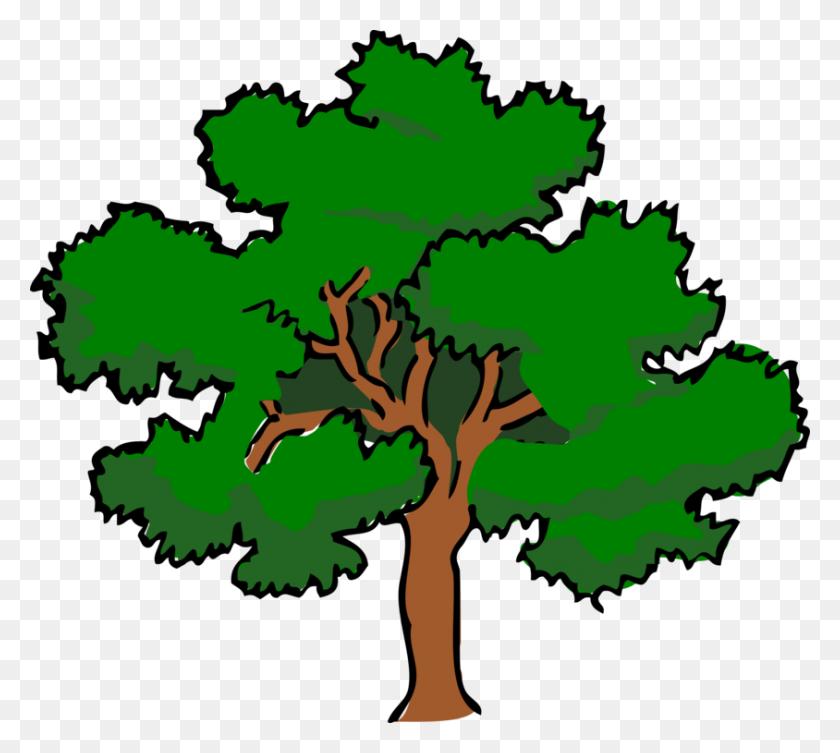 Swamp Spanish Oak Tree White Oak Northern Red Oak Woody Plant Free - Oak Tree Clip Art