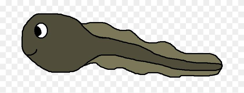 706x261 Tadpole And Frog Clip Art - Tadpole Clipart