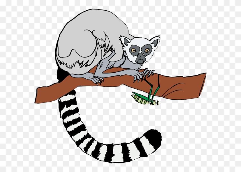 600x539 Tail Clipart Lemur - Tail Clipart