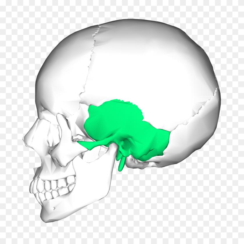 Temporal Bone - Bones PNG